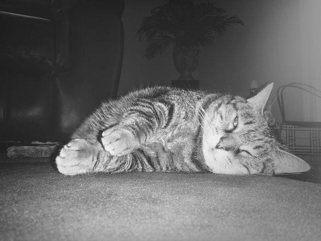 Cats Cat Lounge Rest
