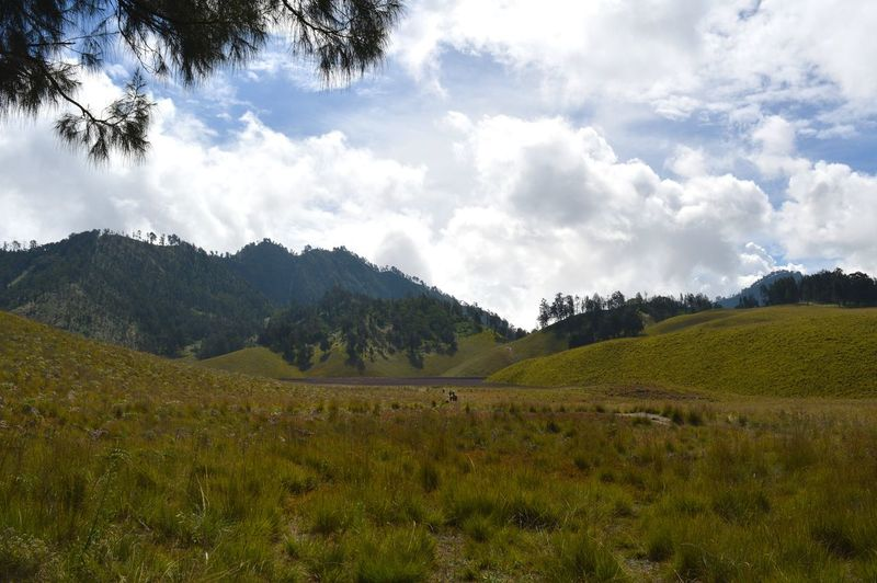 Semeru mountain Bogor Eyeem Market EyeEm EyeEm Gallery Semeru Mountain Gunung Semeru Semeru INDONESIA Tree Cloud - Sky Landscape Nature Beauty In Nature Tranquil Scene Agriculture No People Tranquility Scenics Rural Scene Sky Pinaceae Forest Outdoors Mountain Growth Grass