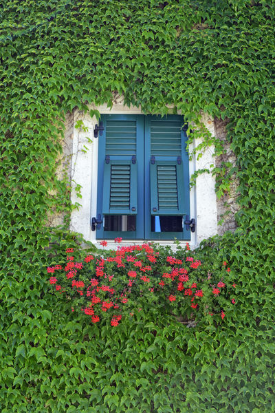 199/365 2017 Alto Adige Architecture Beauty In Nature Blooming Day Flower Fragility Freshness Green Color Growth House Italy July 18 Nature No People One Year Project Outdoors Plant South Tyrol Termeno - Tramin Tirol  Trentino Alto Adige Window