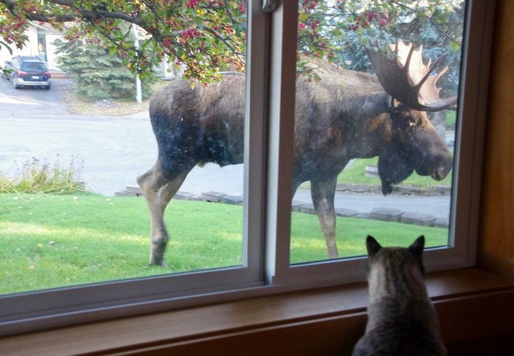 A Cat Is Watching A Moose Day Looking Through Window Nature No People Pets