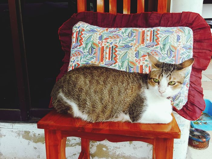 EyeEm Selects meow Domestic Animals Domestic Cat Table Mammal Animal Themes Pets Cat Lovers Cats 🐱 Catofeyem Cats Of EyeEm Morning