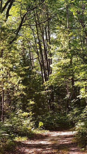 Tree Full Frame Forest Sunlight Backgrounds Shadow