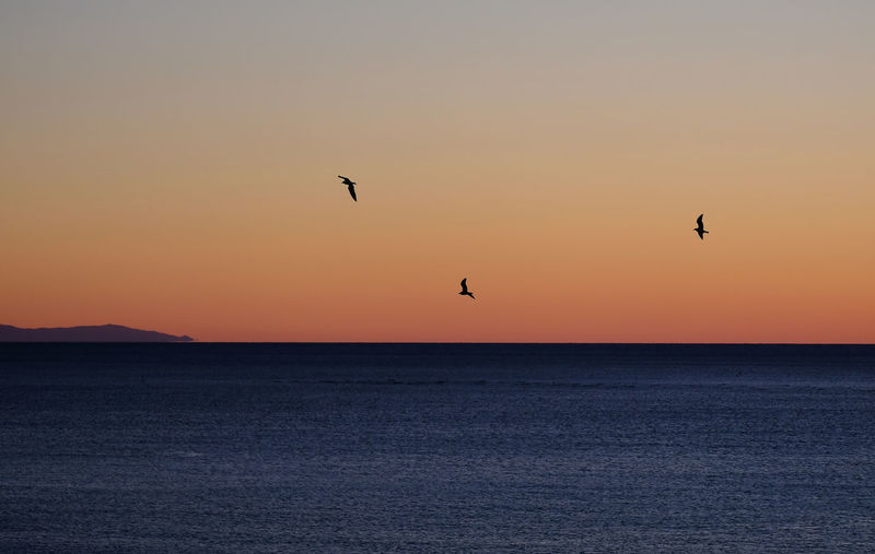 Silhouette birds flying over sea against clear sky during sunset