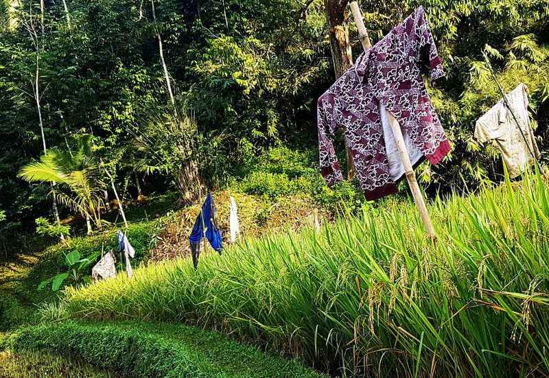 In Indonesia, the scarecrow wears batik:)Green Color Freshness Beauty In Nature Morning Light Scarecrows Plants 🌱 Paddy Field BatikIndonesia BatikJawa Paddy Javanese Culture Javanese Tradition Farmer Footpath Rice Grain Tourism Travel Traditional Investing In Quality Of Life