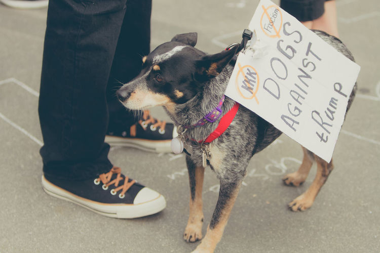 Charlottesville Protest Sign Day Dog March Outdoors Solidarity