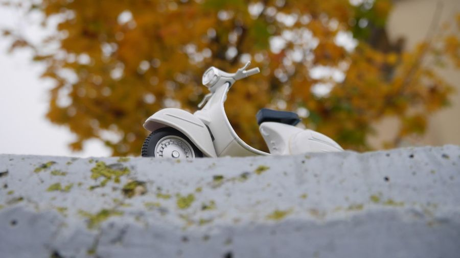 Selective Focus Day No People Mode Of Transportation Transportation Autumn Mood Nature Motor Vehicle Close-up White Color Plant Tree