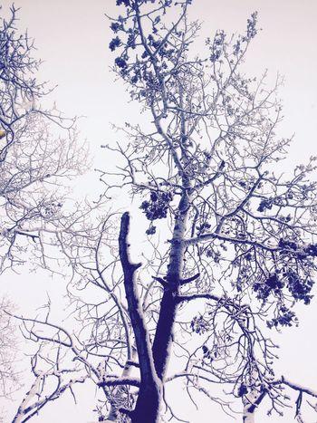 Snowy days Snow ❄