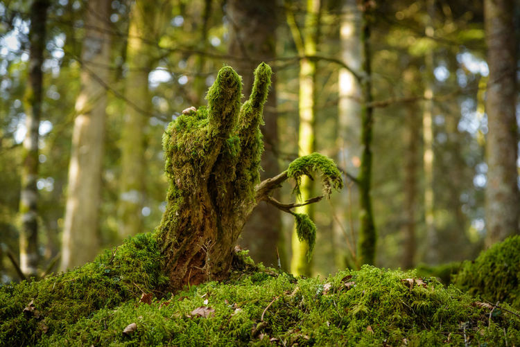 Erve Erve Miozzo Photo Miozzo Outdoors Rainforest Close-up Day No People Tranquility Focus On Foreground Beauty In Nature Green Color Nature Moss Tree Trunk Trunk Plant Tree Forest Bark Land Growth WoodLand Sunlight