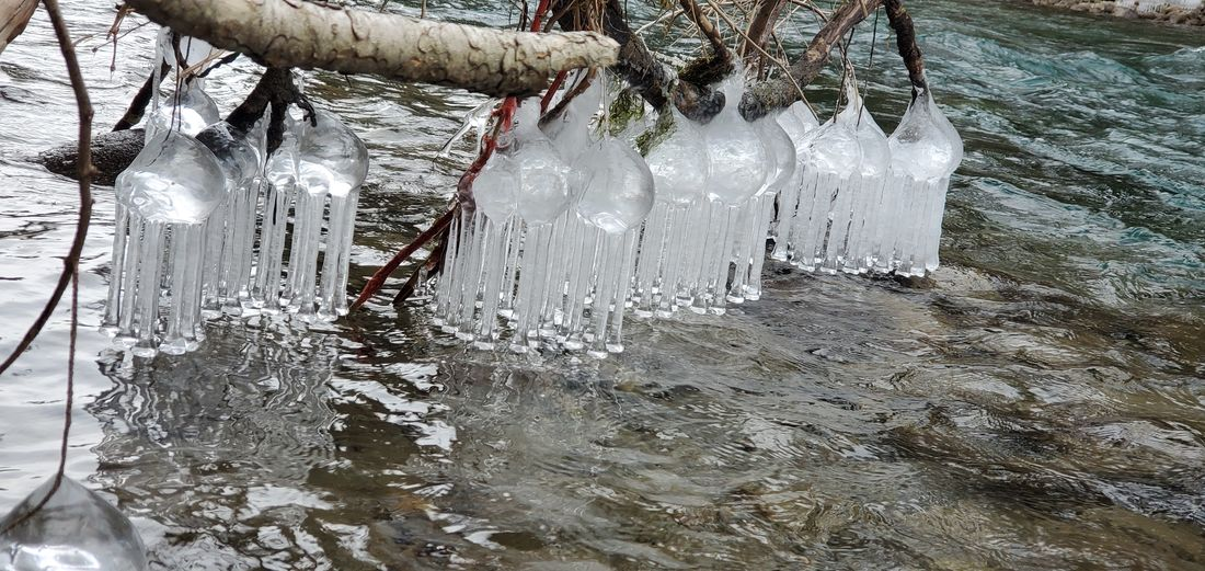 Close-up of icicles hanging from tree during winter