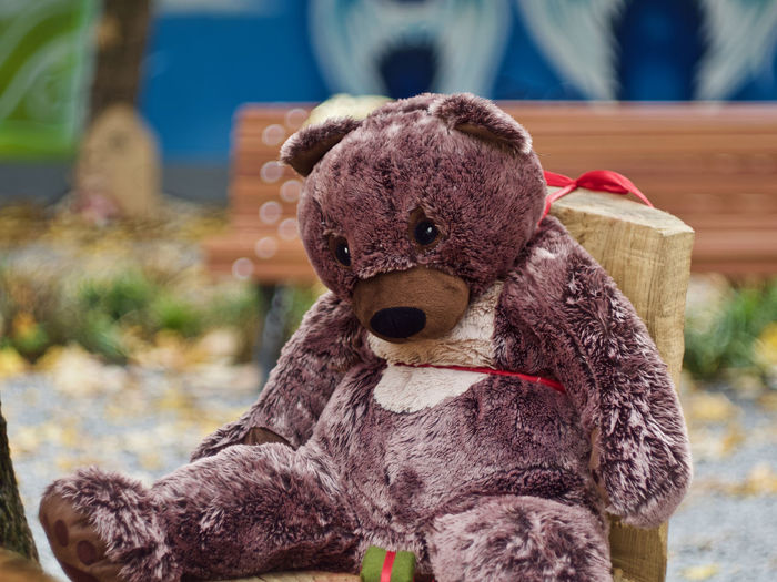 Toy Stuffed Toy Representation Focus On Foreground Teddy Bear Animal Representation No People Day Close-up Art And Craft Toy Animal Creativity Brown Stuffed Indoors  Still Life Mammal Animal Themes Single Object Softness Mouth Open