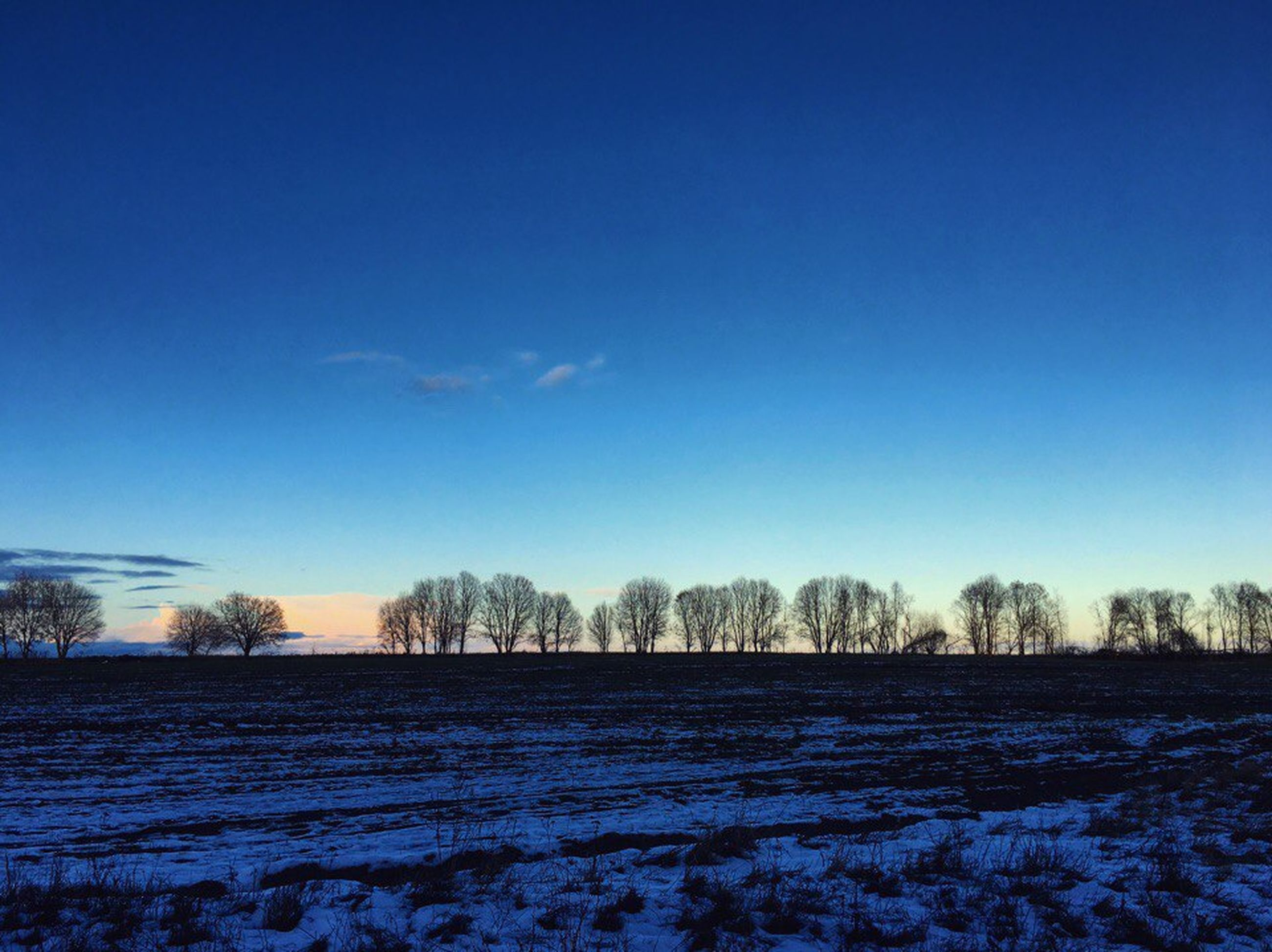tree, blue, bare tree, nature, no people, sky, tranquility, tranquil scene, rural scene, field, winter, beauty in nature, snow, outdoors, cold temperature, scenics, agriculture, day, landscape
