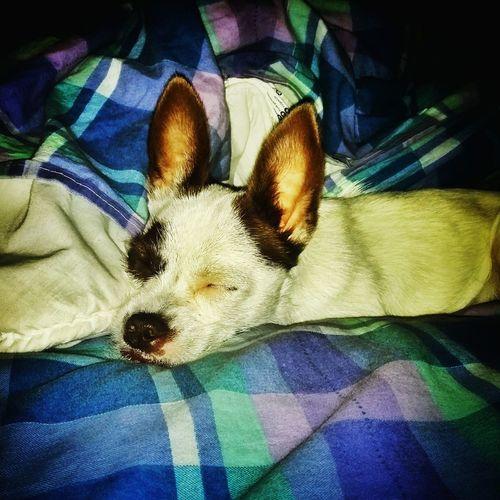 Relaxing Enjoying Life Hello World Goodmorning Friends Puppy Love DogLove Hello World