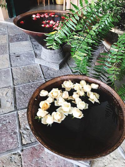 High Angle View Freshness Flower Head Flowerporn Flowers,Plants & Garden Flojera Siluet