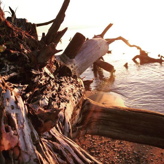 Summer Latvia Beach Kolkasrags Sunrise Sea First Eyeem Photo