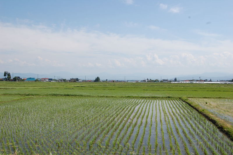 Springtime in Fukushima Prefecture - raw / natural photo - Agriculture Beauty In Nature Cloud Cloud - Sky Crop  Cultivated Land Day Field FUKUSHIMA Grass Grassy Green Color Growth Horizon Over Land Idyllic Japan Landscape Nature Plant Remote Rural Scene Scenics Sky Tranquil Scene Tranquility