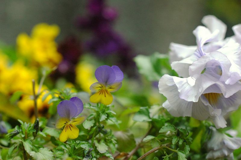 Good Morning Showcase March Relaxing Enjoying Life Colorful Spring Flowers Bokeh EyeEm Nature Lover 春 Spring Time Flower Collection Spring Colours EyeEm Flower Colors