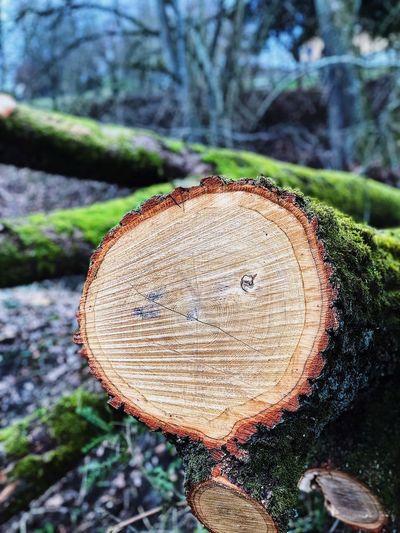 Woods Freedoom