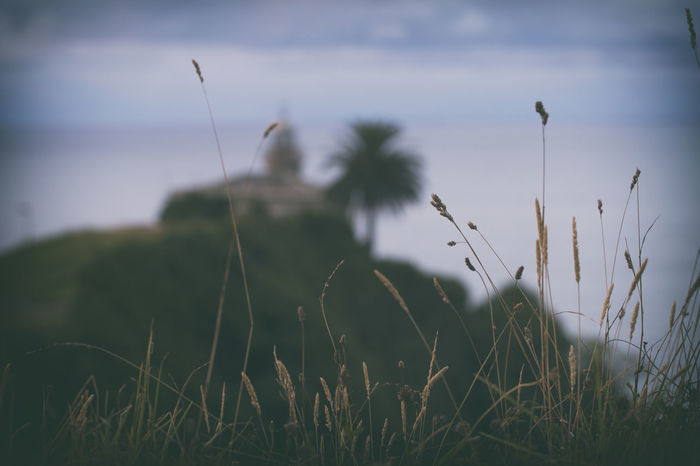 Blurred View Of The Lighthouse Of Candas Asturias Blurred Horizontal Lighthouse SPAIN Sunny Close-up Coast Day Flower Grass Landscape Nature No People Outdoors Sea Selective Focus Sky Summer Sunset Toned Image Tranquility Village