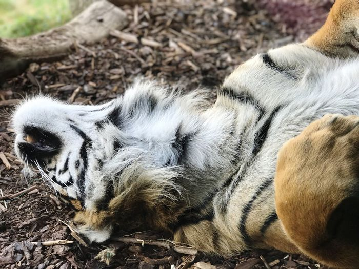 Close-up of animal sleeping on field