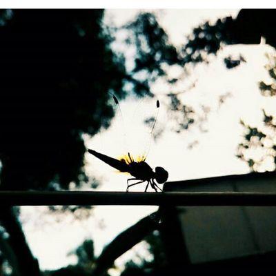 Morning Butterfly MyClick Phone Photography Silhoutte ! Fun Beauty ;)