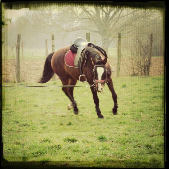 L'air du paradis est celui qui passe entre les oreilles de mon cheval. Taylor♥