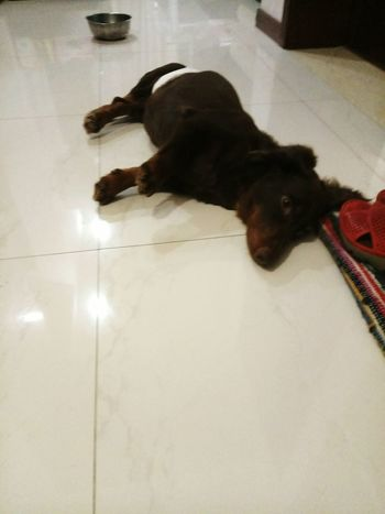 Coffee has been suffering from paralysis. But my family and I won't give up on him! Sausagedog I Love My Dog Dachshundlove Dachshund Cute Pets Pet Doggie Doglover Dog Lover Dog❤ My Puppy Dog Love Dog Dogs Of EyeEm