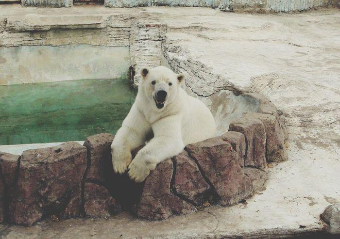 Hello ❤ Cute Animals Zoo Iloveanimals Animals Inthezoo White Whitebear Bear