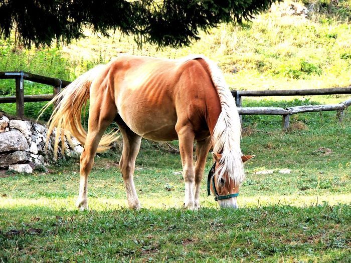 Horse grazing on field at farm