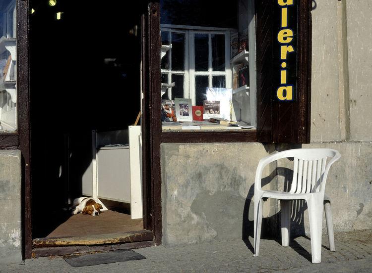 Chair Dog Dogs Jewish Town Kazimierz KAZIMIERZ DOLNY Lubelskie Lubelszczyzna Old Shop Old Shops Poland Polen Shop Town Waiting