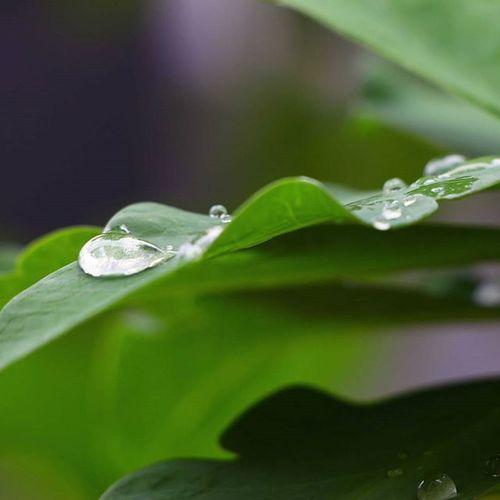 Nature_collection Nature Leaf 🍂 Greenleaf Dew