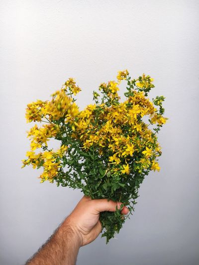 Cropped Image Of Hands Holding Flowers Against White Background