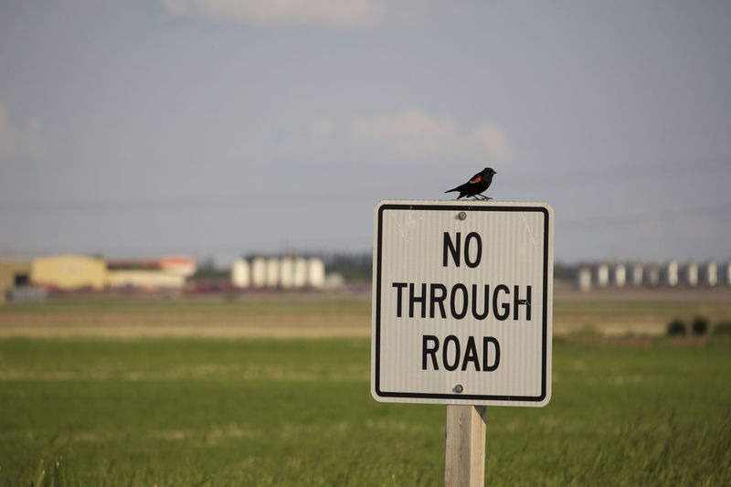 Animal Themes Animal Wildlife Animals In The Wild Beauty In Nature Bird Capital Letter Communication Day Field Focus On Foreground Grass Guidance Information Sign Nature No People One Animal Outdoors Perching Road Sign Signboard Sky Text Warning Sign Western Script