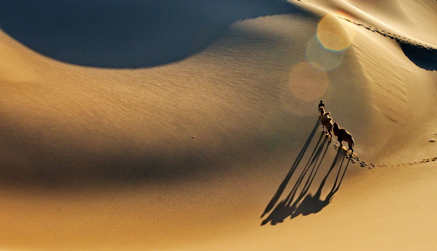 Desert landscape with walking camels at sunrise Animal Themes Beauty In Nature Bird Close-up Day Flying Nature No People Outdoors Sand Scenics Sky Sunset Water