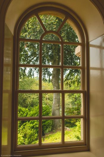 Trees seen through glass window of house