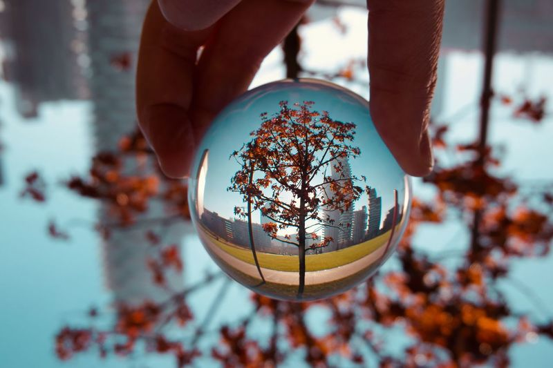Cropped hand holding crystal ball against tree