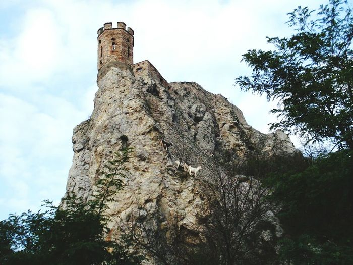 Animal Face Historical Monuments Old Castle Devin Castle Bratislava