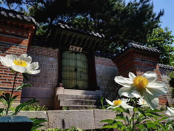 Spring Flowers Gyeongbokgung Palace Joseon Dynasty Palace Architecture Seoul Architecture Architecture Tripwithsonmay2017 Tripwithson2017 Seoul Southkorea