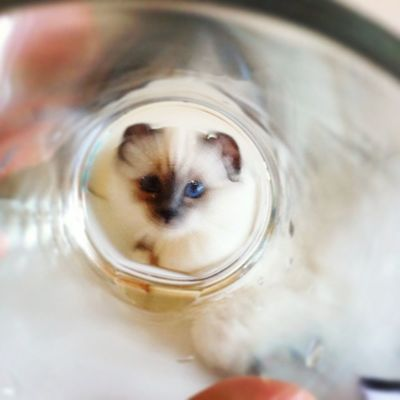 Adelee under glass!