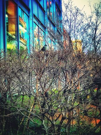 Built Structure Building Exterior Plant Architecture No People Tree Bare Tree Nature Growth Outdoors Day Branch Dried Plant Flower Sky