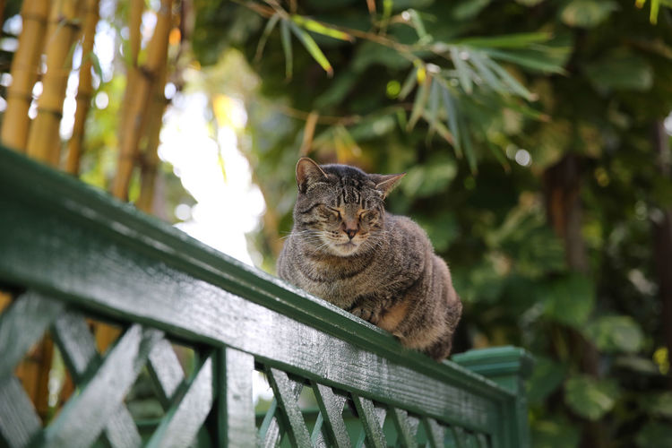 Close-up of cat relaxing on fence