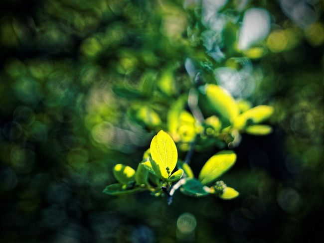 Beauty In Nature Claudetheen Close-up Green Green Color Growth Leaf Light Light And Shadow Nature Plant Spring Springtime Sunset Vintage