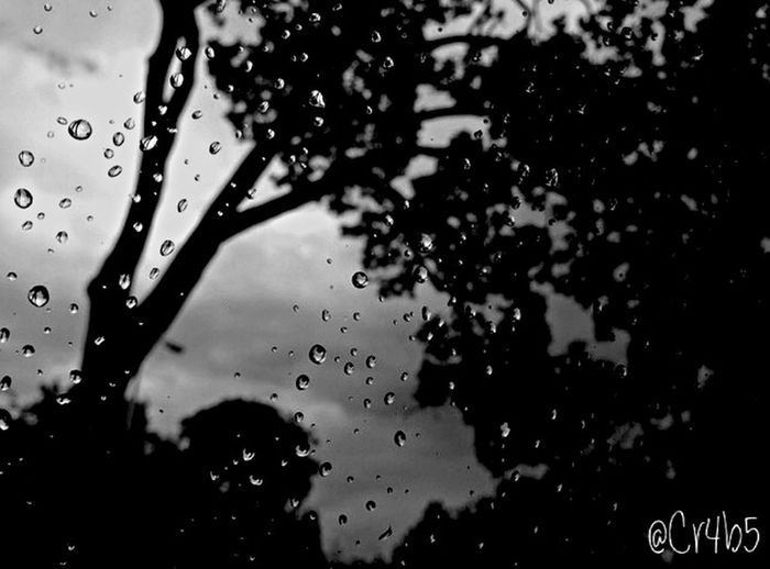 When I was in the car, stuck in traffic Taking Photos Hello World Enjoying Life Check This Out Wayerdroplets Water Rain Drops Beautiful Nature Trees