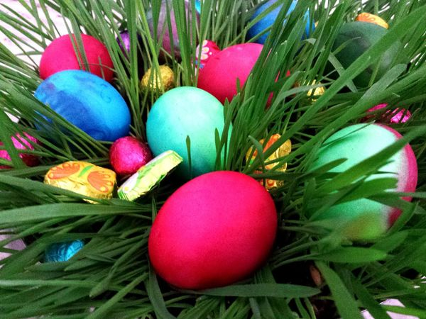 Easter Ready. Colourful Easter Eggs in a Nest of Green Grass. ... Pink Pink Color Beautiful Colours Knallbunt Kontrastfarben Contrasting Colors Frisches Grün Bunt Ostereier Bunte Ostern Colourful Multi Colored Green Red Food And Drink Close-up Visual Feast Easter Grass Nature Grass The Secret Spaces Happy Easter Everyone Easter Decoration Osternest Easter Eggs Easter Ready Hidden Easter Eggs EyeEm Selects Neon Life