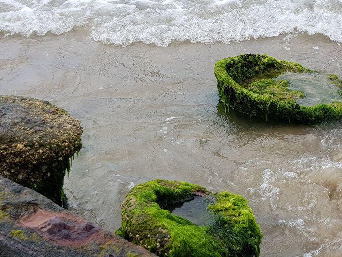 naufragio Naufragio Shipwreck Beach Ruinas Mat Water Textured  High Angle View Sand Beach Close-up Lichen Algae Seaweed Shore
