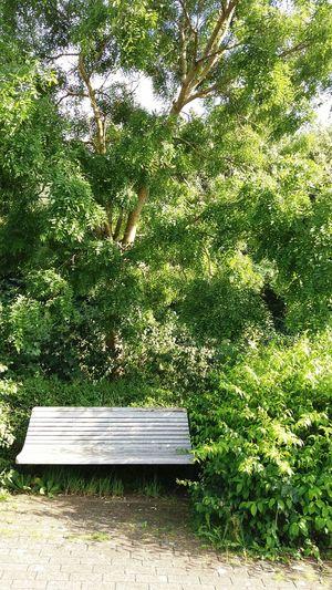 Bench Tree Idyllic Scenery Sunny Day Green