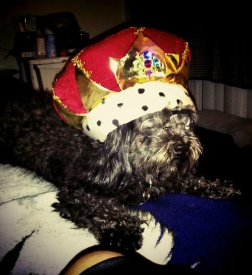 I am king Indoors