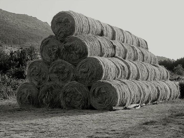 Agriculture El Campito Avila SPAIN