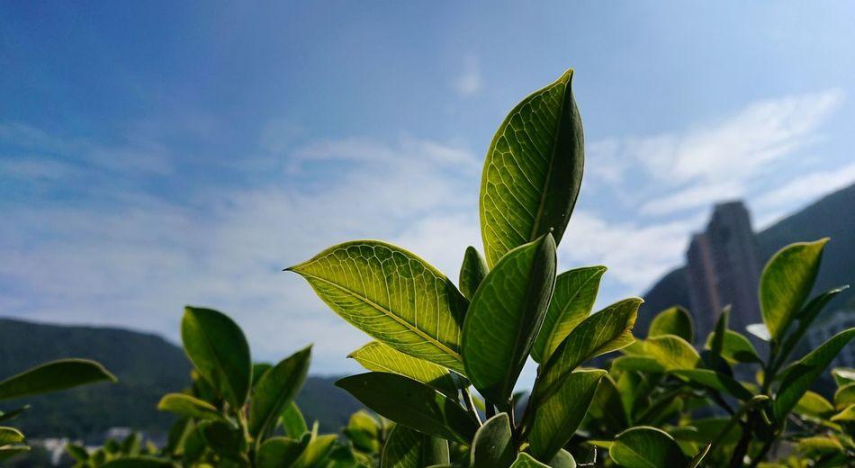 Plant Green