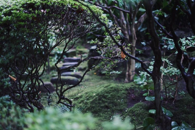 VSCO Streetphotography Vscocam Light And Shadow Snap Japan Nature