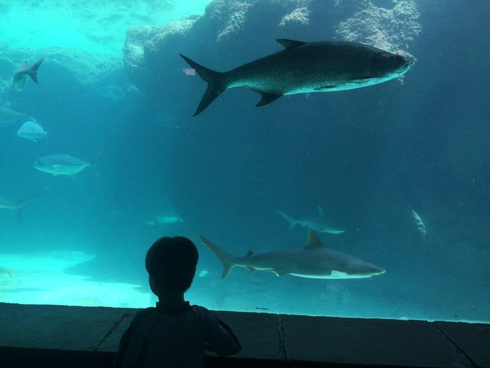 Rear View Of Boy Looking At Fishes In Aquarium